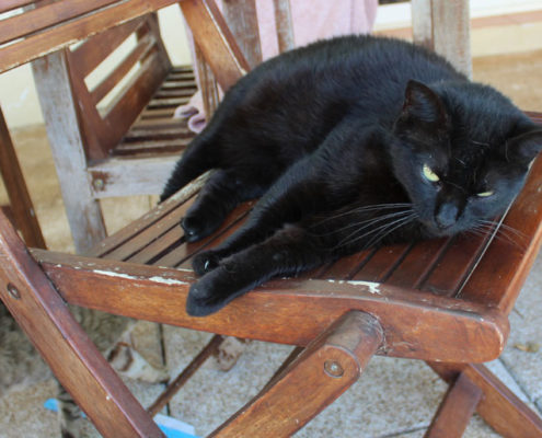 Menorca Cats in Need