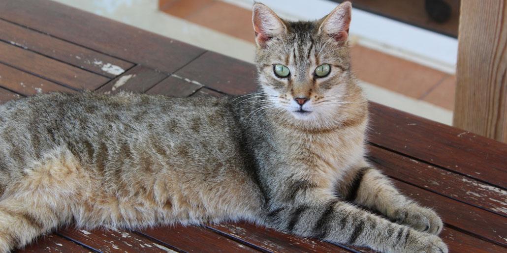 Menorca Cats in Need